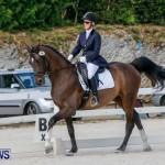 Horses Dressage Bermuda, May 3 2014-1