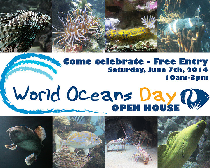 bermuda world oceans day