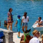 Non Mariners Bermuda, August 3 2014-27