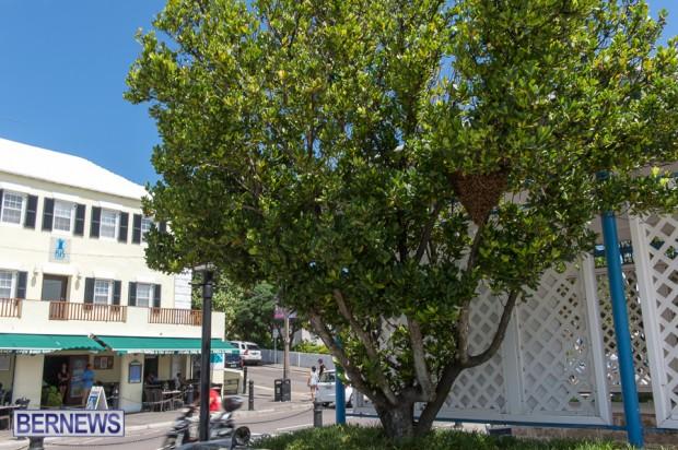 bees-in-bermuda-sept-4-2014-05