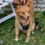 Blessing Of The Animals Service Bermuda, October 5 2014-10