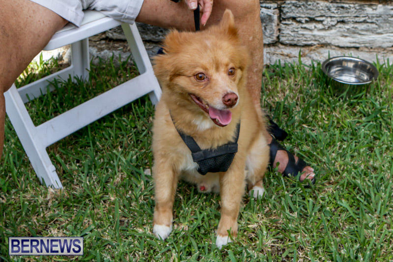 Blessing-Of-The-Animals-Service-Bermuda-October-5-2014-10