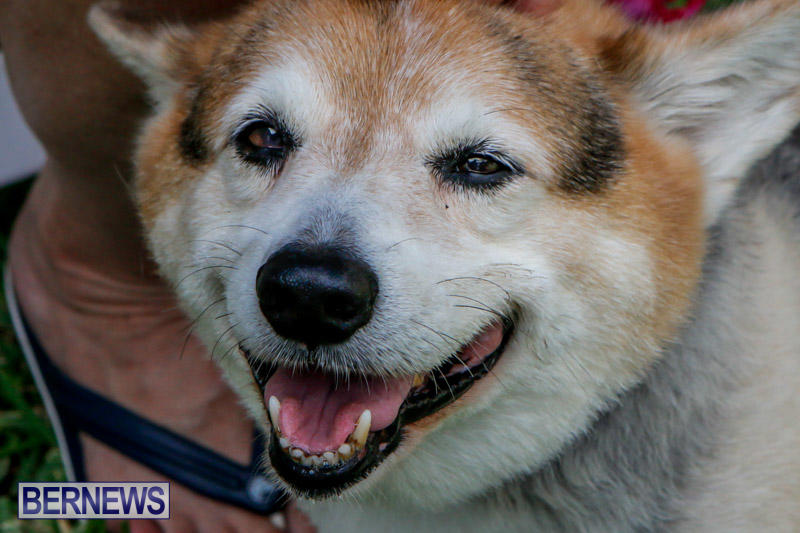 Blessing-Of-The-Animals-Service-Bermuda-October-5-2014-13