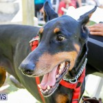 Blessing Of The Animals Service Bermuda, October 5 2014-14