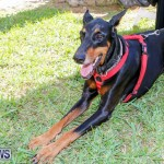Blessing Of The Animals Service Bermuda, October 5 2014-16