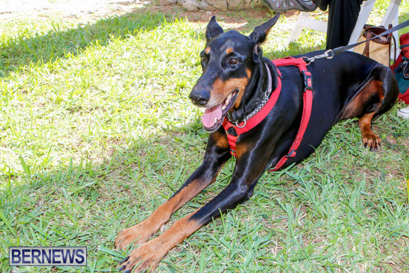 Blessing-Of-The-Animals-Service-Bermuda-October-5-2014-16