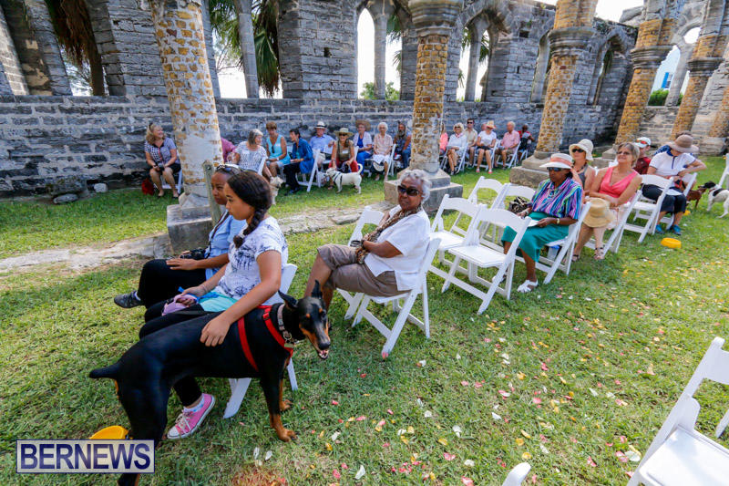 Blessing-Of-The-Animals-Service-Bermuda-October-5-2014-18