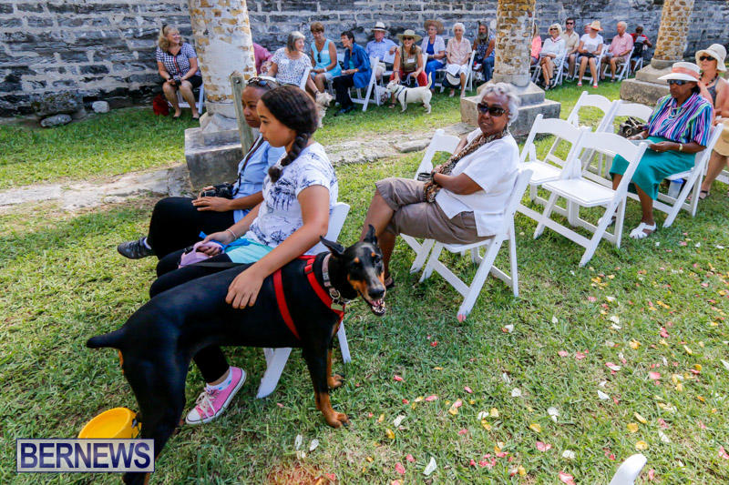 Blessing-Of-The-Animals-Service-Bermuda-October-5-2014-19