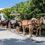 Blessing Of The Animals Service Bermuda, October 5 2014-2