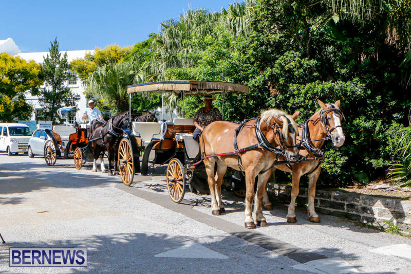 Blessing-Of-The-Animals-Service-Bermuda-October-5-2014-2