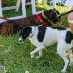 Blessing Of The Animals Service Bermuda, October 5 2014-21
