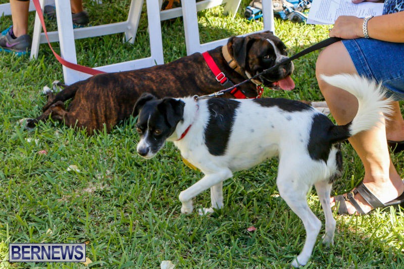 Blessing-Of-The-Animals-Service-Bermuda-October-5-2014-21