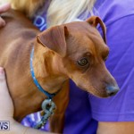 Blessing Of The Animals Service Bermuda, October 5 2014-22