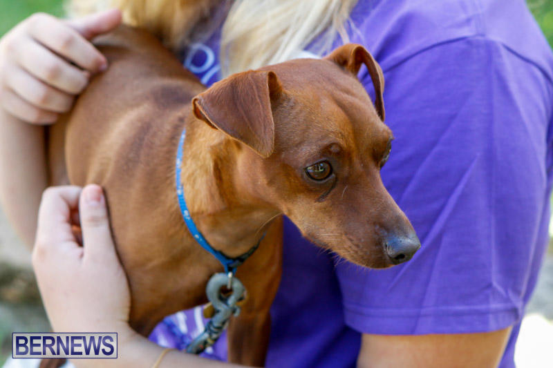 Blessing-Of-The-Animals-Service-Bermuda-October-5-2014-22