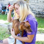Blessing Of The Animals Service Bermuda, October 5 2014-23
