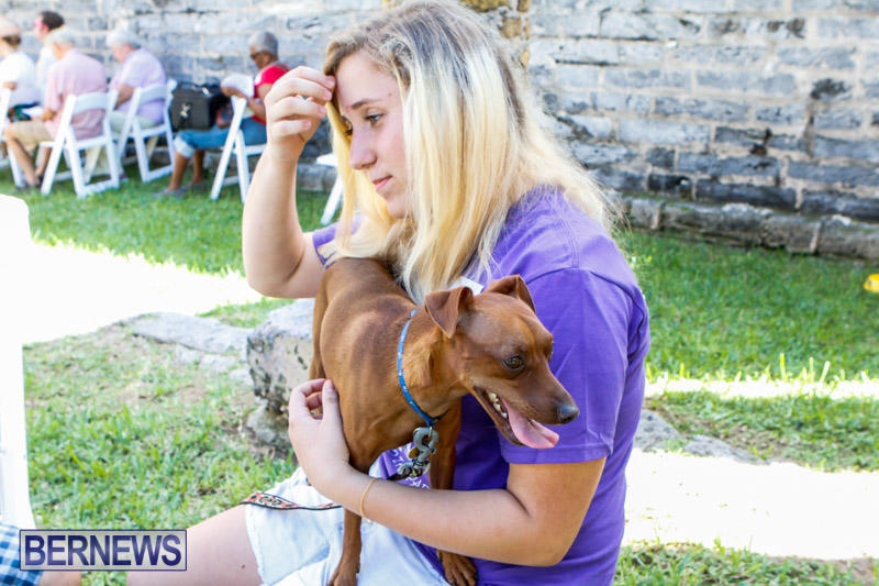 Blessing-Of-The-Animals-Service-Bermuda-October-5-2014-23