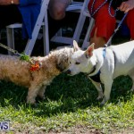 Blessing Of The Animals Service Bermuda, October 5 2014-26