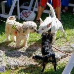 Blessing Of The Animals Service Bermuda, October 5 2014-27