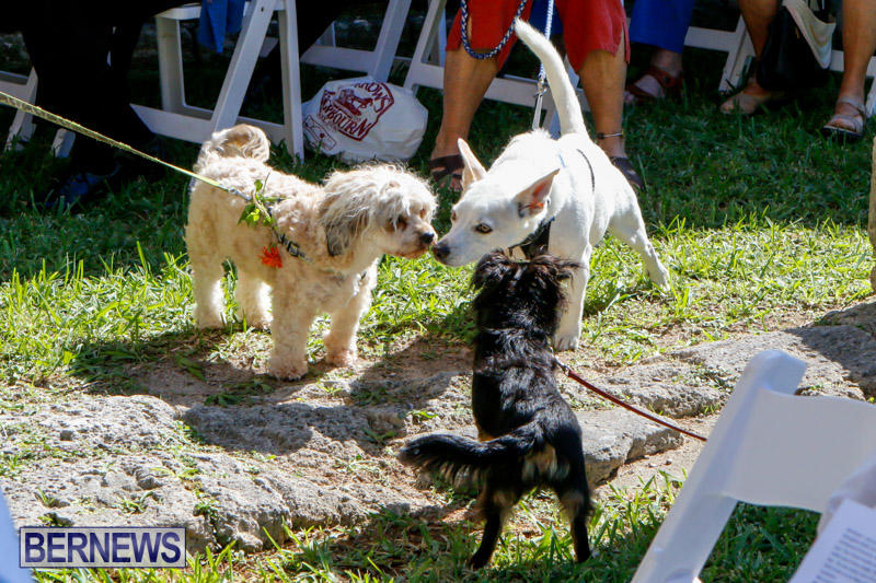 Blessing-Of-The-Animals-Service-Bermuda-October-5-2014-27