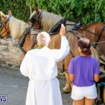 Blessing Of The Animals Service Bermuda, October 5 2014-30