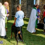 Blessing Of The Animals Service Bermuda, October 5 2014-33