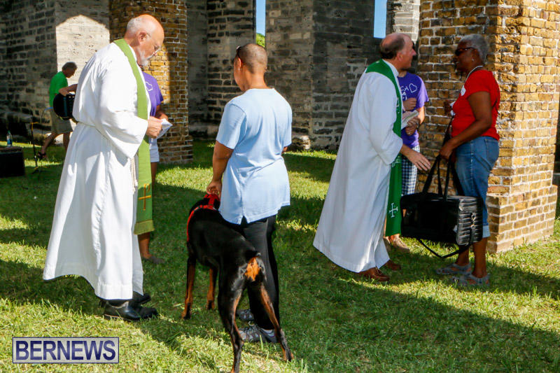 Blessing-Of-The-Animals-Service-Bermuda-October-5-2014-33
