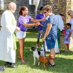 Blessing Of The Animals Service Bermuda, October 5 2014-36