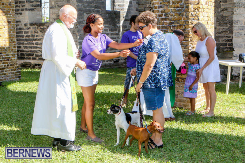 Blessing-Of-The-Animals-Service-Bermuda-October-5-2014-36