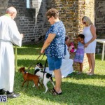 Blessing Of The Animals Service Bermuda, October 5 2014-37