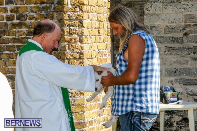 Blessing-Of-The-Animals-Service-Bermuda-October-5-2014-39