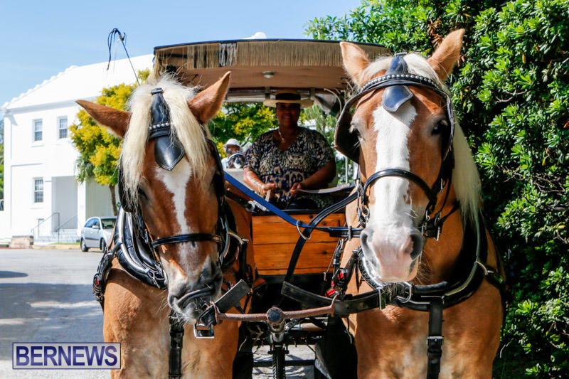 Blessing-Of-The-Animals-Service-Bermuda-October-5-2014-4