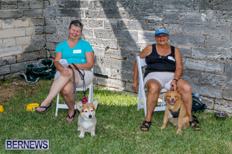 Blessing-Of-The-Animals-Service-Bermuda-October-5-2014-5