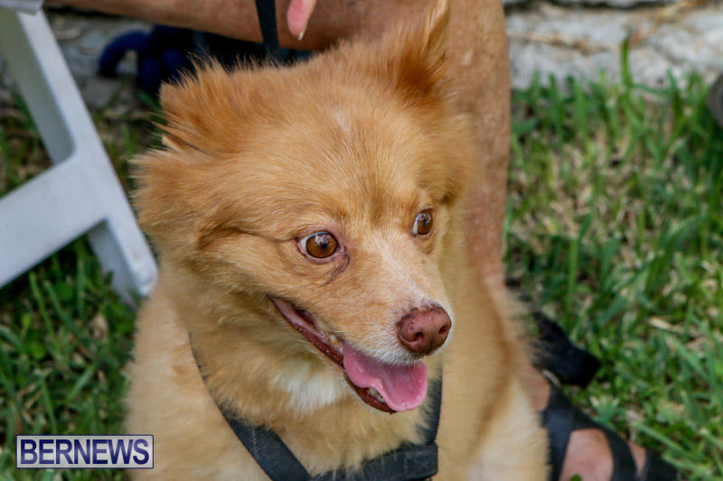 Blessing-Of-The-Animals-Service-Bermuda-October-5-2014-8