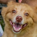 Blessing Of The Animals Service Bermuda, October 5 2014-9