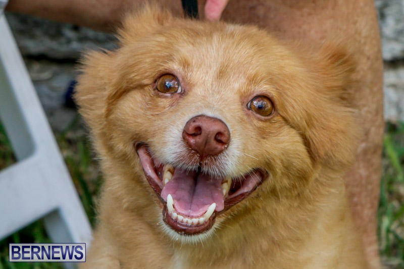 Blessing-Of-The-Animals-Service-Bermuda-October-5-2014-9
