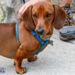 SPCA Fun Fair Bermuda, October 11 2014-31