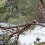 Tropical Storm Fay Bermuda, October 12 2014-124