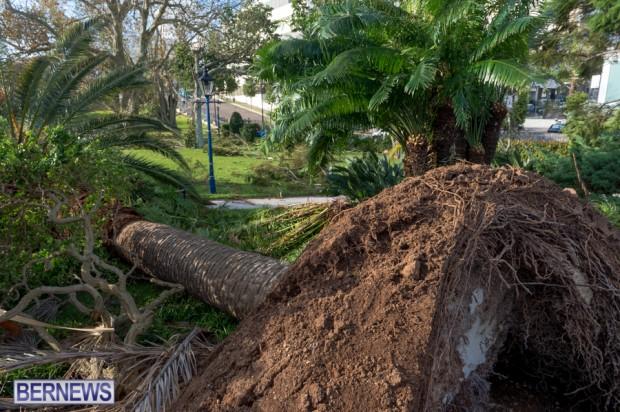 Victoria Park Bermuda after Storm Fay 2014 (11)