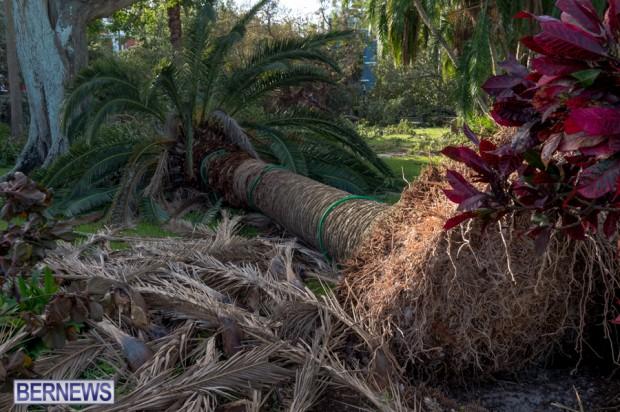 Victoria Park Bermuda after Storm Fay 2014 (7)