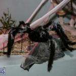 Halloween Bermuda, October 31 2014-12