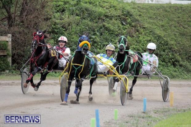 Harness Pony Racing Bermuda (10)