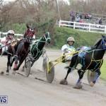 Harness Pony Racing Bermuda (11)