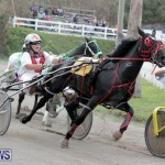 Harness Pony Racing Bermuda (12)