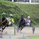Harness Pony Racing Bermuda (14)
