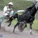Harness Pony Racing Bermuda (15)