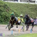 Harness Pony Racing Bermuda (16)