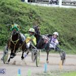 Harness Pony Racing Bermuda (17)