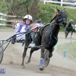 Harness Pony Racing Bermuda (18)