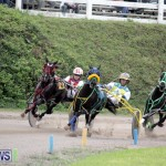 Harness Pony Racing Bermuda (2)