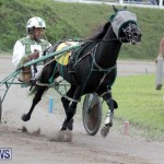 Harness Pony Racing Bermuda (22)